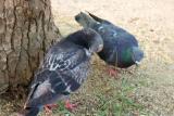 鳩忌避剤・害鳥ネット施工 最長1年保証付き!お気軽にご相談ください。【鳩駆除】