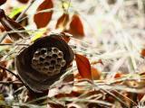 【1月受付中・コロナ対応◎】蜂の巣駆除なら当社へ!【不用品回収】