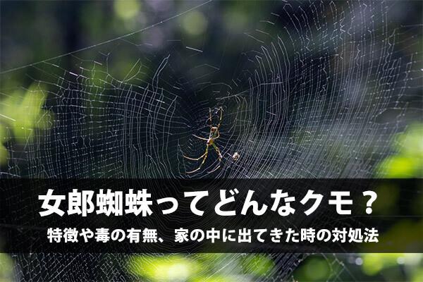 女郎蜘蛛はどんなクモ?女郎蜘蛛(ジョロウグモ)は毒を持ってるの!?