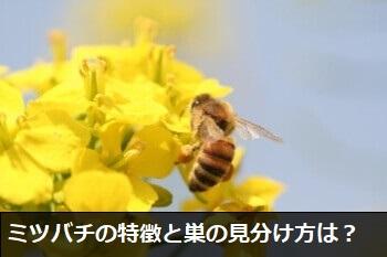 ミツバチの特徴と巣の見分け方