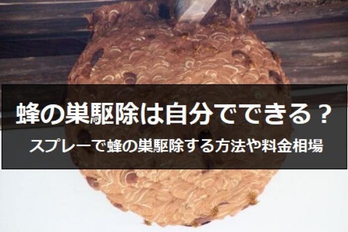 【恐怖】ハチの巣が自宅に!自分で蜂の駆除できる?プロが教える蜂の駆除