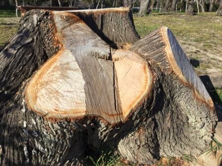 【伐採の道具】自分で庭木を伐採する前に道具を揃えよう!