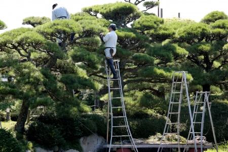 業者に庭木の伐採を依頼したら料金相場はどれくらいなの?
