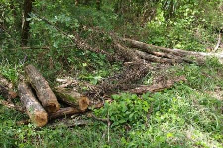 庭木の伐採を業者に依頼する前に知っておくべきポイント