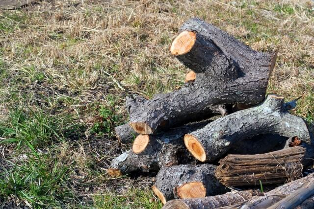 【自分で伐採する方法】伐採する前にお祓いした方がいいの!?