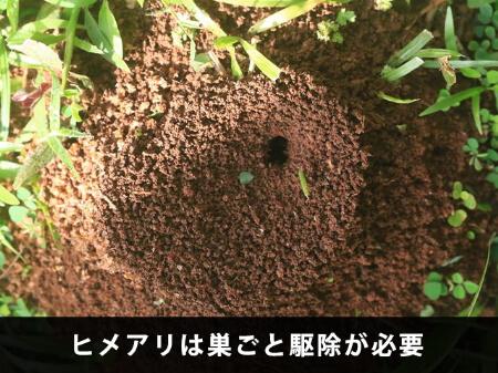 【ヒメアリの駆除】ヒメアリは巣ごと駆除が必要です!