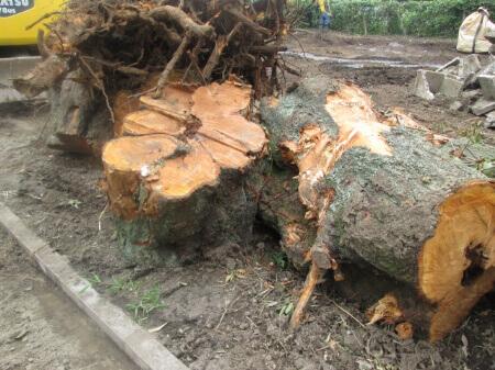 【抜根の料金相場】抜根は木の種類や抜根方法によって料金が違う!