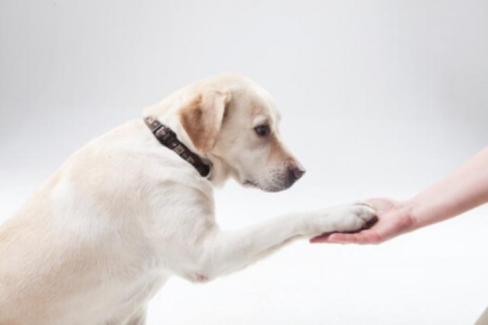 ペットのしつけに1人で悩んでない?育犬ノイローゼにならないペットのしつけ方