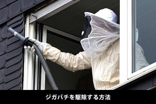 【ジガバチの駆除】自分で簡単にジガバチを駆除する方法