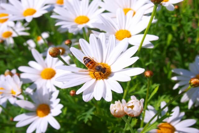 【ジガバチの生態や特徴】ジガバチの駆除方法をまるごと紹介します!