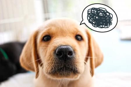 【犬が畳をボロボロにする】根気よくしつけしよう!