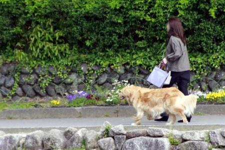 【犬が畳をボロボロにする】犬のストレスを減らそう!