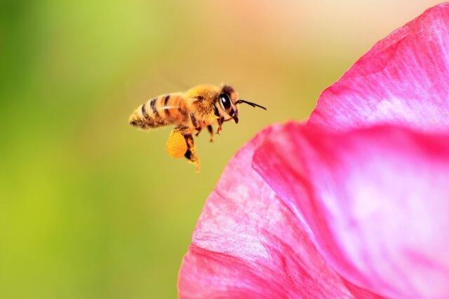 ミツバチの特徴や巣の特徴について知ろう!