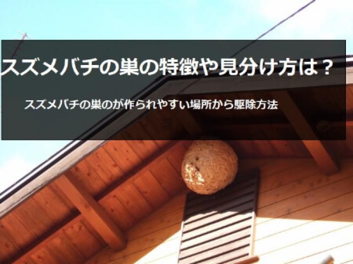 スズメバチの巣を知ってる!?スズメバチの巣のて正しい知識を知ろう