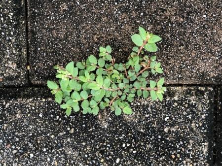 庭に砂利を敷いたら定期的なメンテナンスも必要になります!