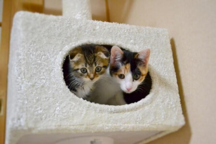 一人暮らしで猫を飼うための心構え/ 一人暮らしで猫を迎えるための準備と旅行時の対応
