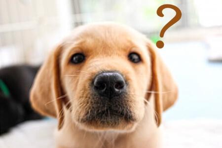 犬と暮らすなら「ペット保険」の加入を検討しよう