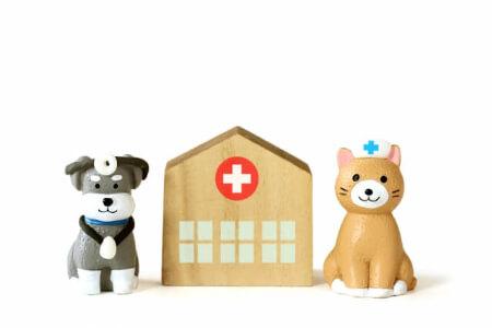 犬も保険に入ると安心!犬にかかる年間の治療費の目安