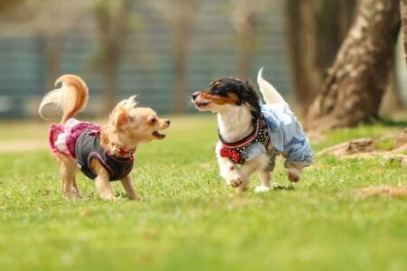 犬の保険で補償されること・されないこと