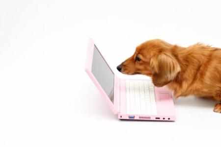 インターネットで加入できる!ペット保険の契約の流れ