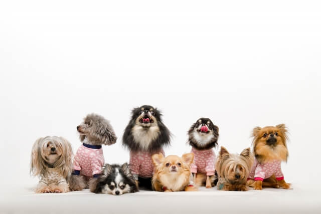 犬にも保険は必要?年間治療費の目安とペット(犬)保険に加入する時のポイント