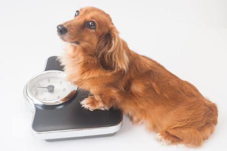 犬の寿命は何歳?犬は人間よりも5倍も早く成長する