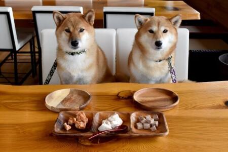【犬の寿命】長生きの秘訣1「定期健診」を受けよう