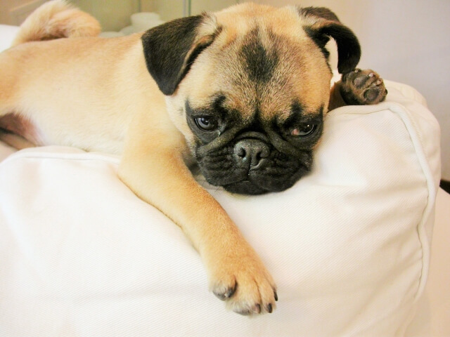 【犬の寿命】1日でも長く一緒に暮らす為の過ごし方