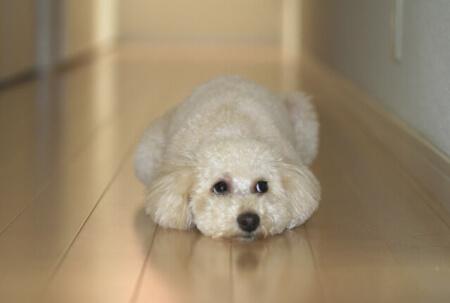 【犬の寿命】絶対やってはいけない飼い方