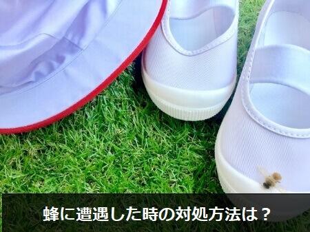 蜂に刺されたら怖い!蜂に遭遇した時の3つの対処方法