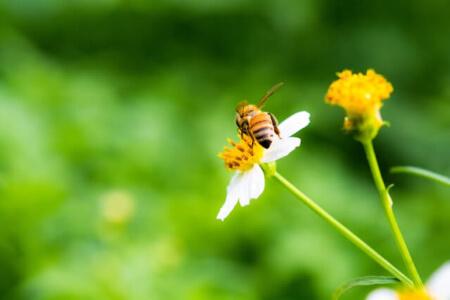 アブと蜂の違いを知ってる?刺された時の症状と対処法の違いを紹介