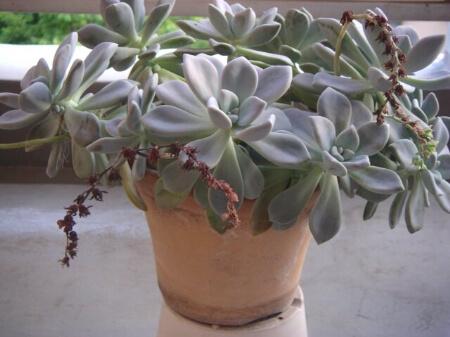 【テラコッタ鉢】テラコッタ鉢に合う植物について知ろう!