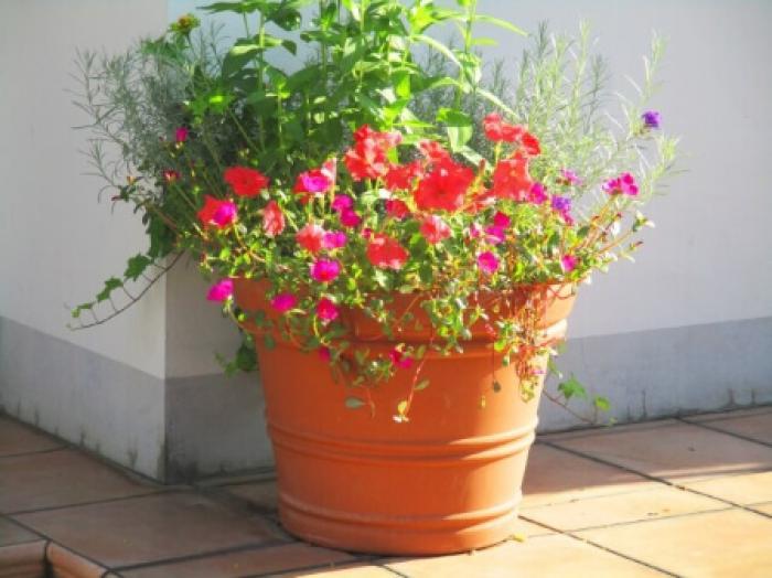 【テラコッタ鉢の特徴】人気のテラコッタ鉢の使用注意点について知ろう!