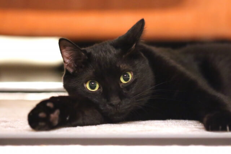 【猫の寿命】平均寿命は15歳です!年々寿命は伸びている!