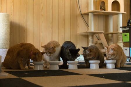 【猫の寿命】猫に長生きしてもらうには「生活環境」と「食事」
