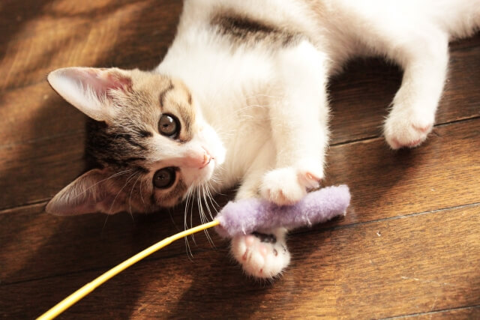 猫の平均寿命は15歳!?猫の寿命を長くするのは「生活環境」と「食事」