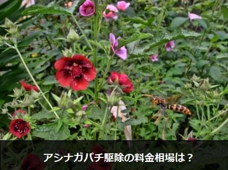 【アシナガバチの駆除】巣を発見したらアシナガバチを駆除する方法