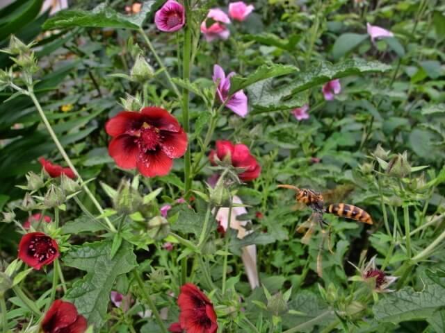 アシナガバチの駆除を業者に依頼したら料金相場はどれくらい?