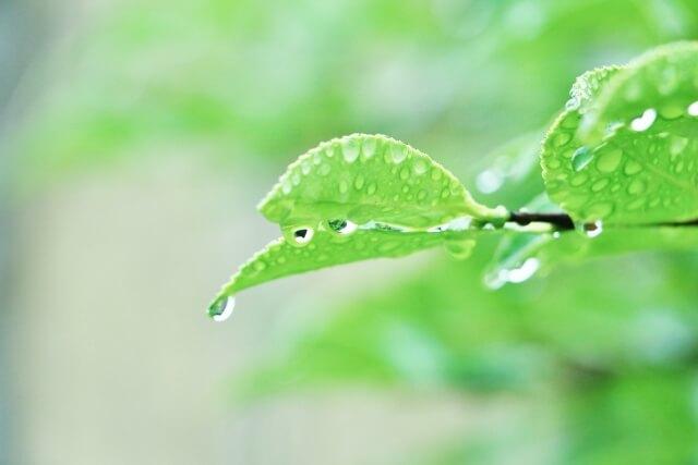 梅雨の時期に発生したやすいヤスデ!正しいヤスデの駆除や予防方法のまとめ