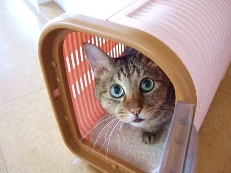 猫の保険のデメリットは「補償範囲」と「保険料の掛け捨て」