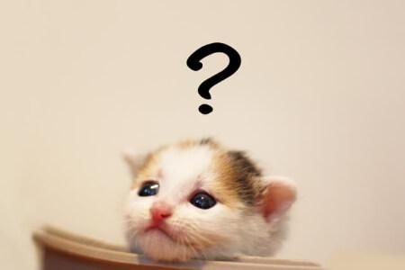 猫の保険「掛け金はいくらくらい?」
