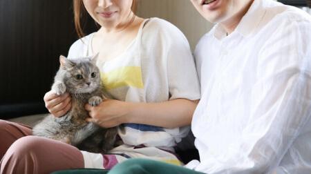 猫の保険「比較するポイントが知りたい!」