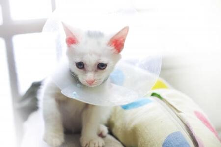 猫の保険に入るべき?猫がなりやすい3つの病気と怪我
