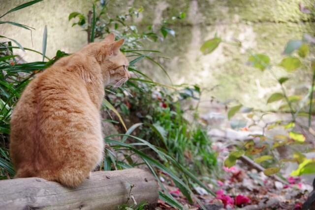 【猫背を整体で改善】猫背にも3つのタイプがある