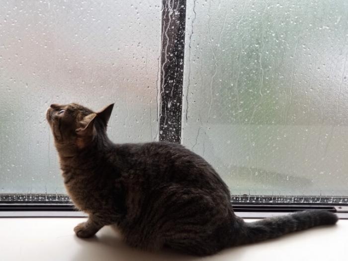 窓の断熱でお部屋の中を快適に!窓の断熱性を高める4つの方法とおすすめフィルム紹介