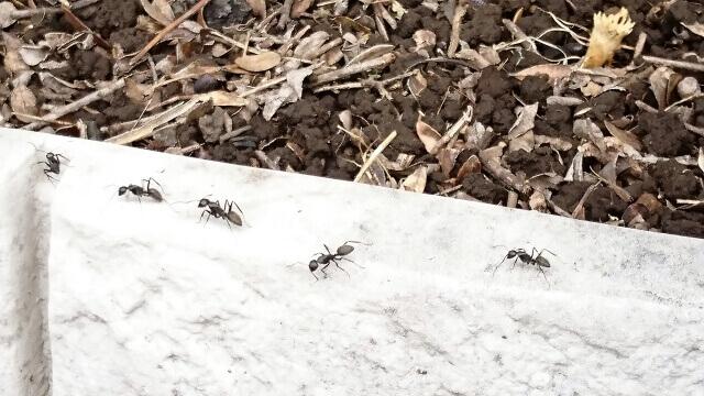 【蟻の駆除】蟻(あり)は種類が多い!シロアリは蟻じゃない!