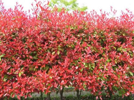 目隠しになる庭木の種類