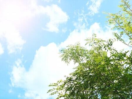 シンボルツリーになる庭木の種類