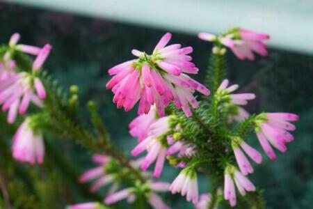 花を楽しめる庭木の種類