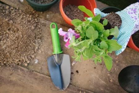 【鉢から抜けない】植物が鉢から抜けない時は土を乾かして抜く!